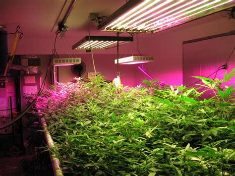 where to buy led grow lights what are the advantages of using led grow lights for