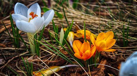 Blumen Im April by April Blumen Tapete