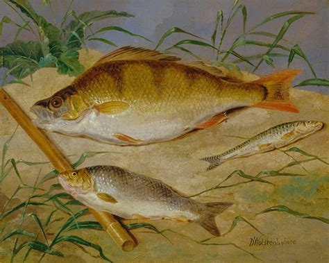 google images fish file dean wolstenholme an angler s catch of coarse fish