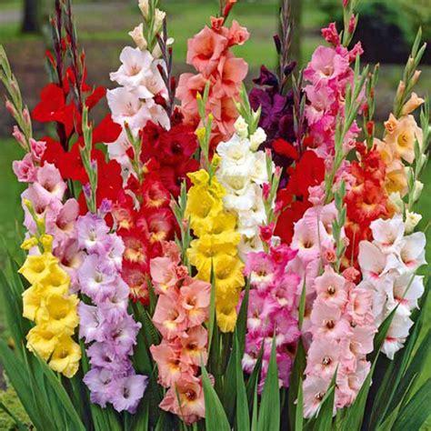 imagenes flores gladiolos 191 sabes qu 233 flores dar en cada ocasi 243 n adn morelos