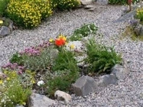 giardini semplici il giardino dei semplici piante medicinali