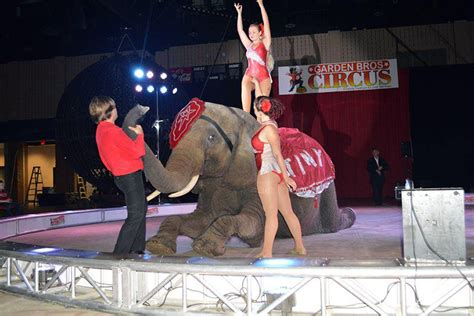 Bros Gardenis traveling circus to visit dc armory this weekend hill now