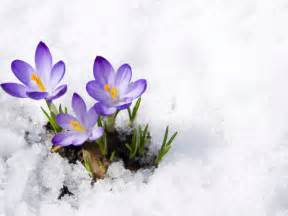 How to protect your flowers in winter