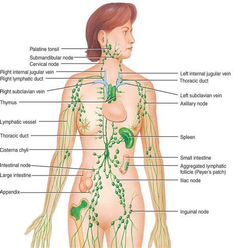 Detox Lymph Nodes Swollen by 25 Best Ideas About Lymph Node On