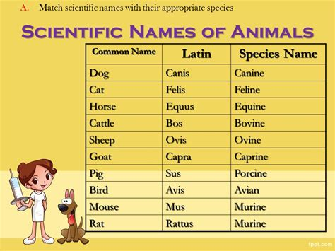 scientific name of veterinary terminology ppt