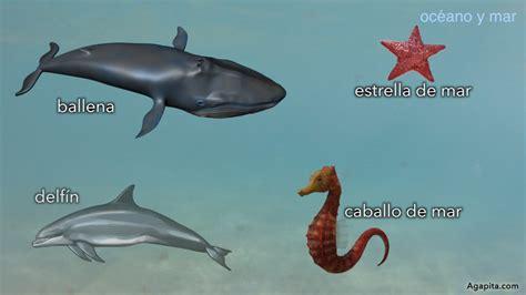 100 ejemplos de animales terrestres y acuticos h 225 bitat de los animales terrestres y acu 225 ticos