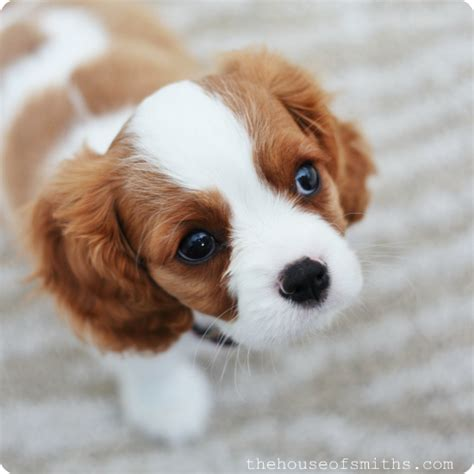 best small dogs to own best dogs to own that dont shed breeds picture