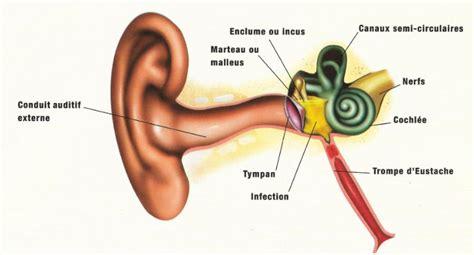 otite traitements causes sympt 244 mes pr 233 vention
