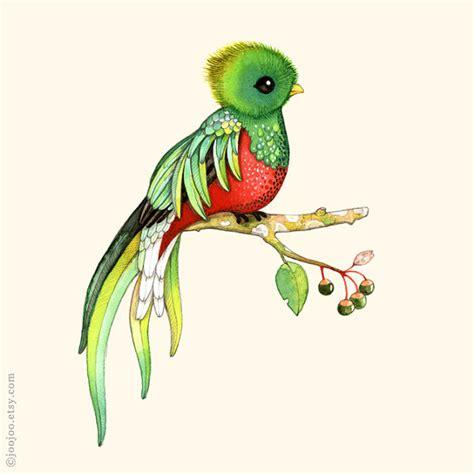 imagenes de quetzal a lapiz alphabet print abc animals bird print bird watercolor