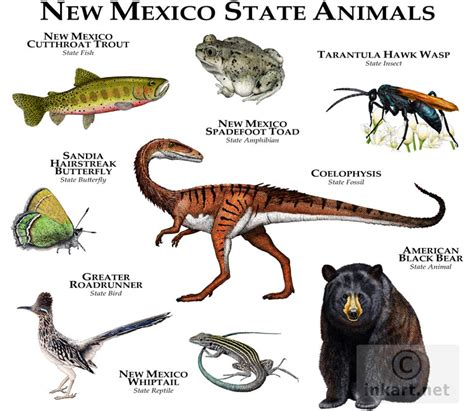 new mexico state colors state animals of new mexico line and color