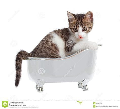 cat bathtub cat in the bathtub stock images image 35982374