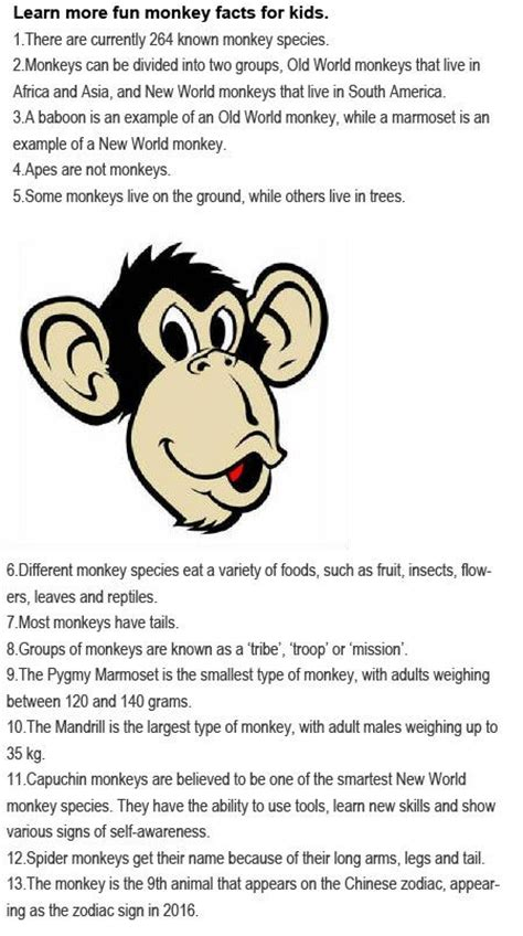 new year facts about the monkey facts about monkeys for are coming in our education