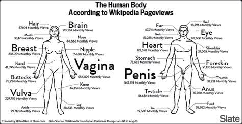 vagaina types اعضای بدن به روایت ویکیپدیا کیبرد آزاد