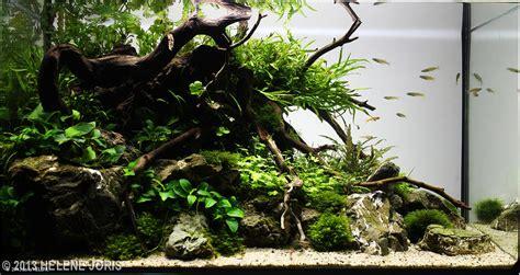 Aquascape Ideas Tropical 2013 Aga Aquascaping Contest 591