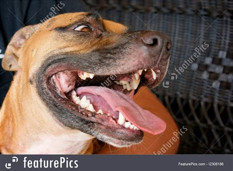 puppies open pets panting with open stock photo i2308186 at featurepics