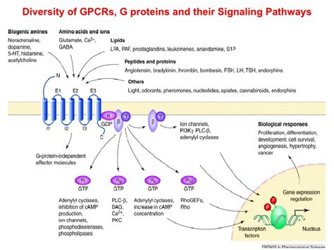 5 7 Billion by Functional Analysis Of Heterologous Gpcr Signaling