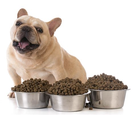 when to feed puppies valuable information to the best food food insider