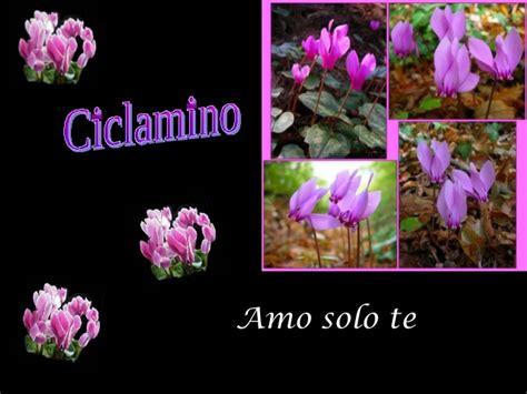 linguaggio fiori amicizia pps linguaggio dei fiori