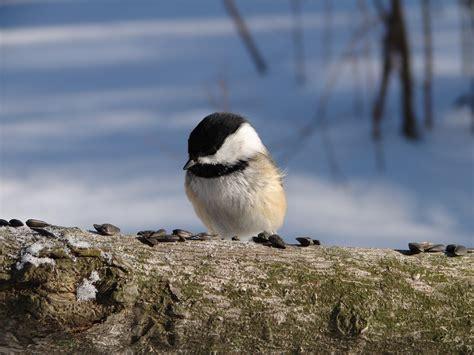 how much do birds eat birdnote
