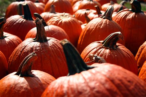 pumpkins wallpaper fall pumpkin background wallpaper images