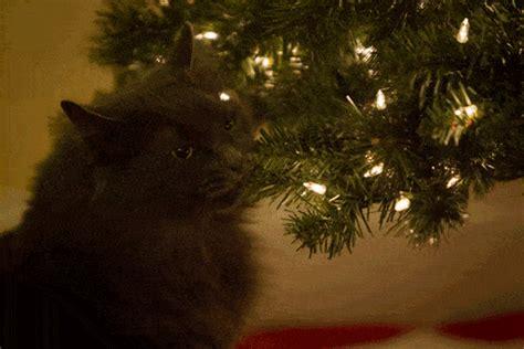20 perros y gatos que se enfrentaron a un 193 rbol de navidad