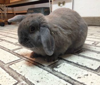 house rabbit network join me and click to donate shop for your cause