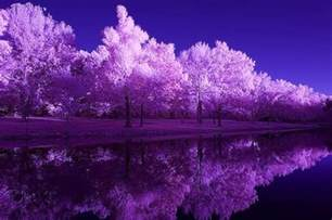 beautiful outdoors purple nature pictures to pin on pinterest