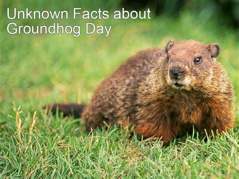 groundhog day tradition 1000 ideas about weekly weather forecast on