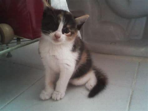 imagenes blancas y negras para bebes gatos bebes blancos con manchas