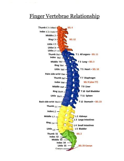 vertebraefinger relationships exquisite healing