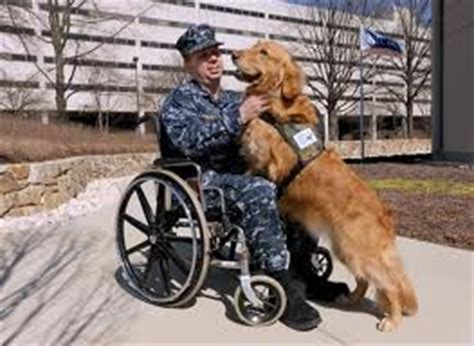 va service dogs feds to provide veterinary insurance for veterans service dogs 171 animal