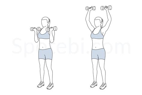 shoulder press diagram arnold shoulder press illustrated exercise guide