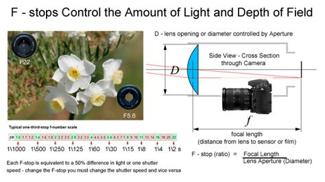 photography f stops and shutter speeds the canadian nature photographer digital photography