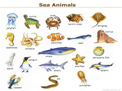 sea animals wall chart 600600 sea animals list names sea