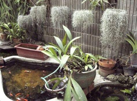 jenis tanaman hias meramabat gantung lengkap