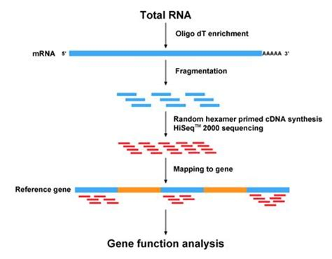 rnaseq workflow next generation sequencing rna seq unix tools and igv