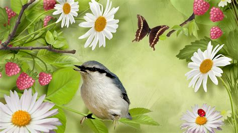 bird and butterfly wallpaper wallpapersafari