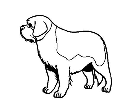 St Bernard Dog Coloring Page Coloringcrew Com St Bernard Coloring Pages