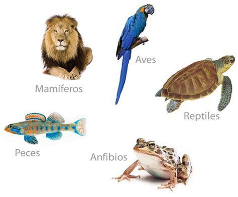 los animales vertebrados reino animal vertebrados e invertebrados