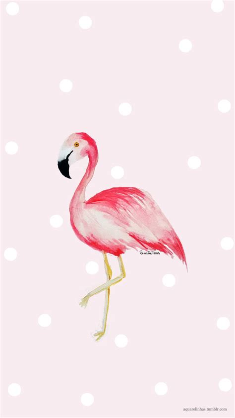 flamingo wallpaper for iphone 6 45 best fancy flamingos iphone wallpapers images on