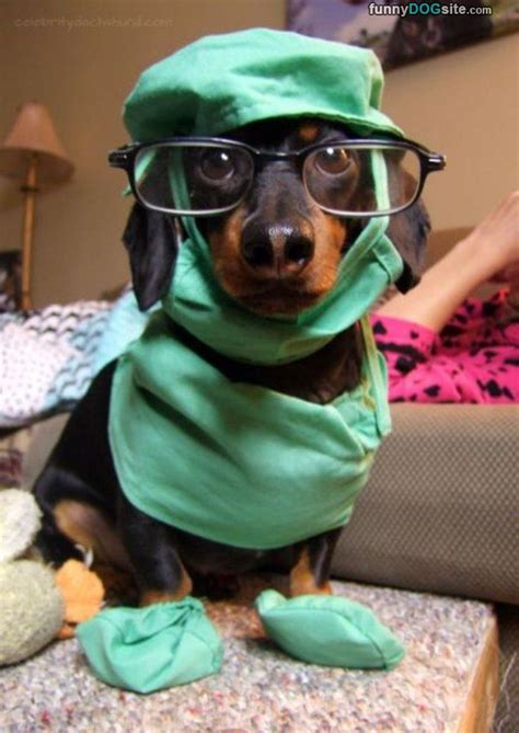 puppy doctor the doctor funnydogsite
