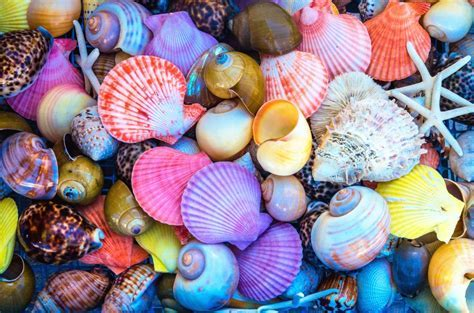 Colorful Sea Shells jigsaw puzzle in Macro puzzles on