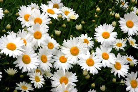 colori dei fiori fiori dell amicizia significato dei fiori fiori