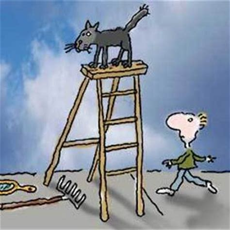 the black cat knocks on wood a bad luck cat mystery book 2 books not superstitious on friday the 13th that s great knock