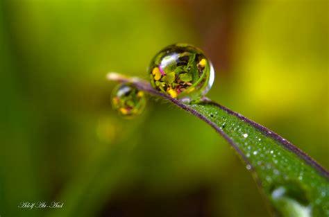 water drop macro nature macro zoom flowers gouttes pluie wallpapers hd desktop