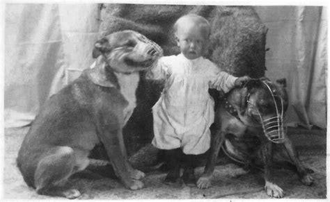 nanny dogs the about pit bulls the nanny myth revealed