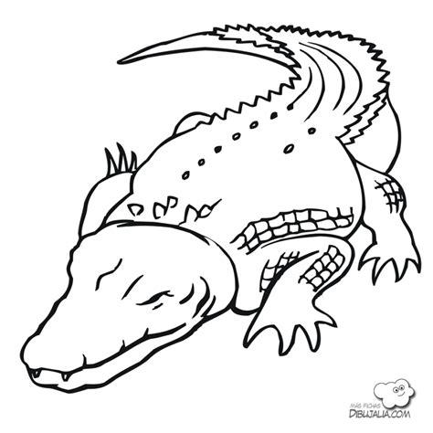 imagenes de animales terrestres para colorear fresco dibujos de animales terrestres y acuaticos para