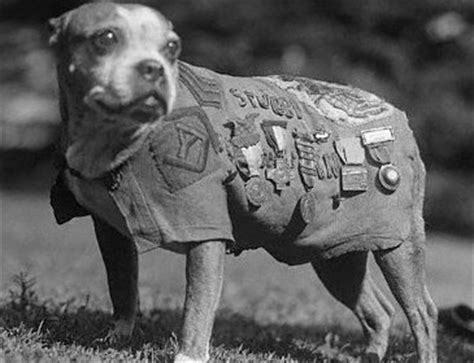 Sgt Stubby Most Decorated War Animals