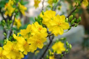 traditional flowers of vietnamese new year hanoitourist