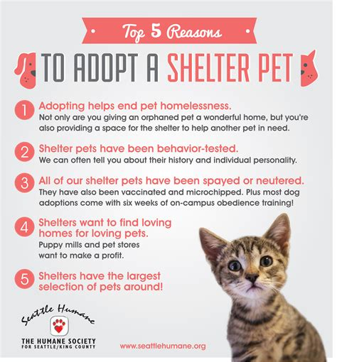 Top 10 Reasons To Adopt A by Uncategorized Seattle Humane S